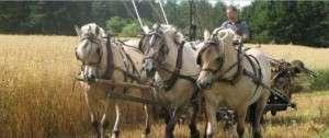 høstmarked